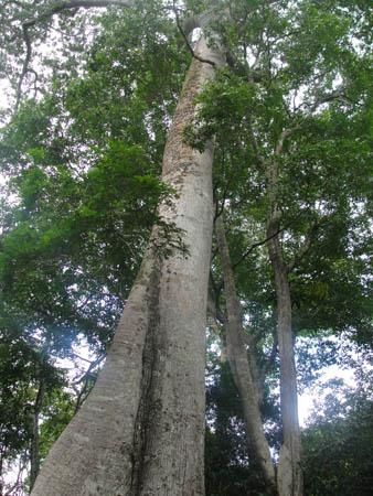 Cientistas da Floresta