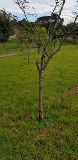 Corte de gramas em praças e canteiros mata árvores urbanas